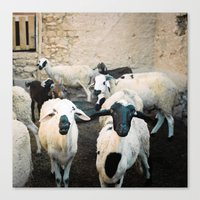 morrocan Canvas Prints featuring Sheep in Morrocan desert (color) by Hanke Arkenbout