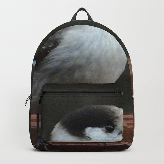 Gray Jay Backpack
