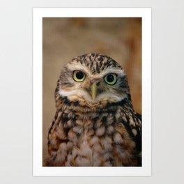 Burrowing Owl Art Print