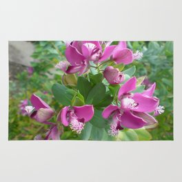 Polygala Myrtifolia Rug