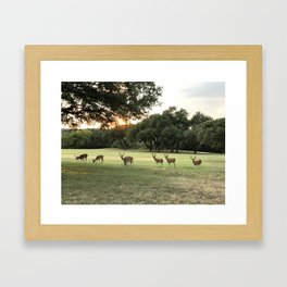 Lakeway Deer at Sunset Framed Art Print