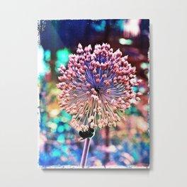 Pastel Allium N Bee Metal Print