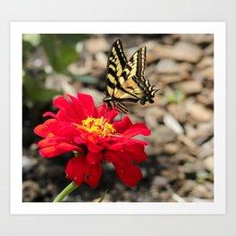 Butterfly Magic Art Print