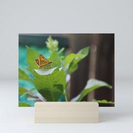 Flutter Skipper Mini Art Print
