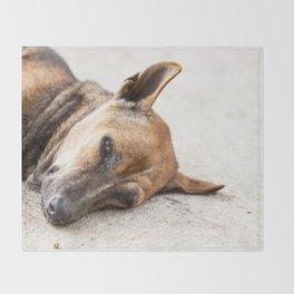 street dog Throw Blanket