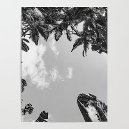 Rainforest Canopy - Tropical Sky Black and White Poster