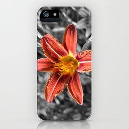 Orange-yellow Hemerocallis iPhone Case