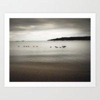 Ducks in the bay Art Print