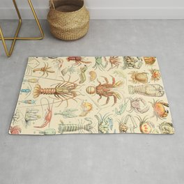 Sea Creatures // Crustaces by Adolphe Millot XL 19th Century Science Textbook Diagram Artwork Rug