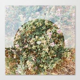 Little Wheel on the Prairie  Canvas Print