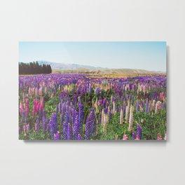 Colorful Flower Meadow New Zealand Metal Print