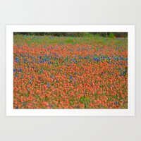 Texas Wildflowers 2 Art Print