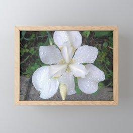 flower III Framed Mini Art Print