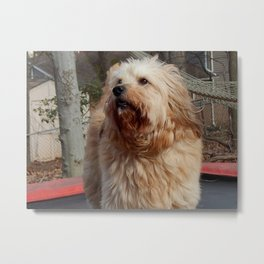 Wind blown trampoline look Metal Print