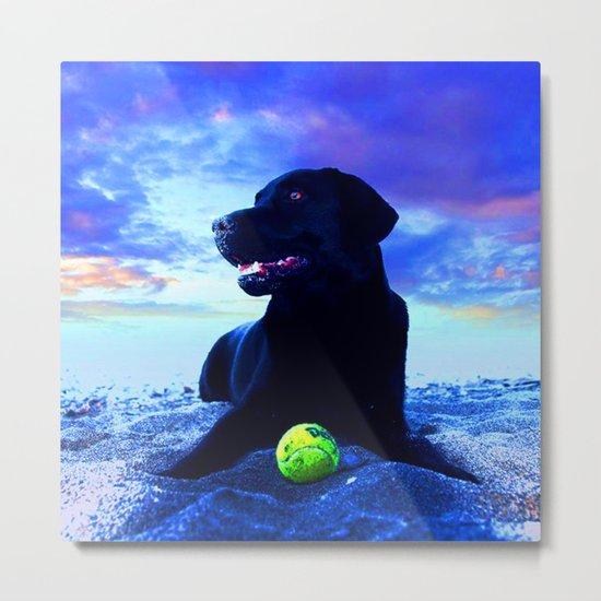 Ziggy Black Labrador Metal Print