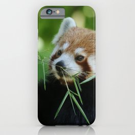 Red_Panda_20150704_by_JAMFoto iPhone Case