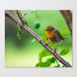European Robin on a tree Canvas Print
