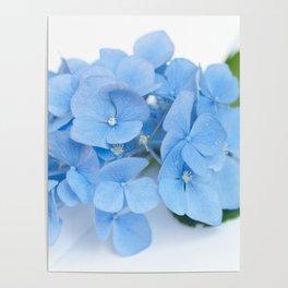 Blue Hydrangeas #1 #decor #art #society6 Poster