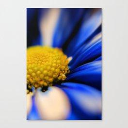 Pinwheel Canvas Print