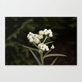 Little flower colored. Canvas Print