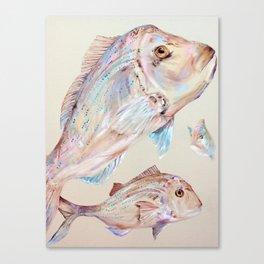 Pink Snapper Fish Canvas Print
