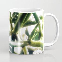 Jade - money plant - succulent in bright light Coffee Mug