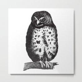 Fluffy owl Metal Print