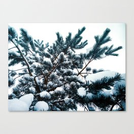 Fluffy fir branches on the sky background Canvas Print