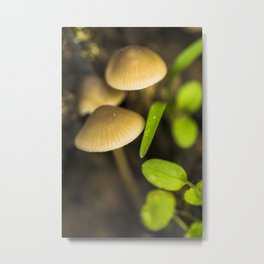 Forest treasures Metal Print