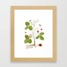 Wild Strawberries Framed Art Print