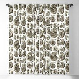 Ernst Haeckel Ammonitida Ammonite Blackout Curtain