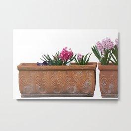 colored hyacinths in ornamental vases Metal Print