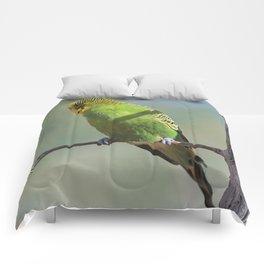 Budgie20150102 Comforters