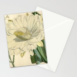 Flower 5775 cereus lividus Livid Cereus1 Stationery Cards