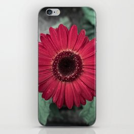 A Full Frontal Closeup of a Red Daisy iPhone Skin