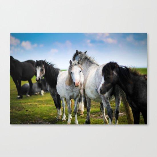 Horses Horses 4 Canvas Print
