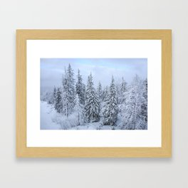 Snowy forest at the White Mountain Framed Art Print
