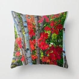Birch Maple by Teresa Thompson Throw Pillow