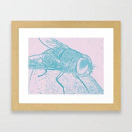 Blue fly Framed Art Print