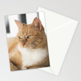 Ginger Cat Relaxing Stationery Cards