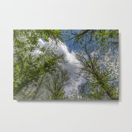 Clouds and trees tops Metal Print