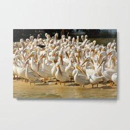 white flocks Metal Print