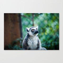 Lethargic Lemur Canvas Print