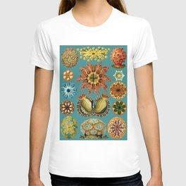 Ernst Haeckel Ascidiae Sea Squirts Teal Background T-shirt