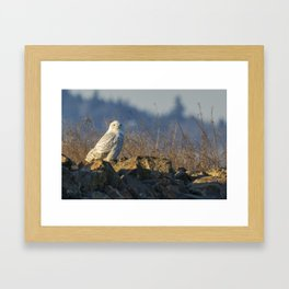 Snowy Owl Perching on the Eastside of a Bern Framed Art Print