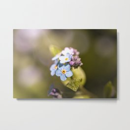 Close-up of forget-me-nots Metal Print