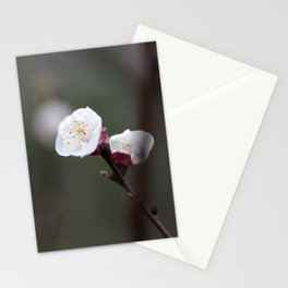Flower PW 04 Stationery Cards