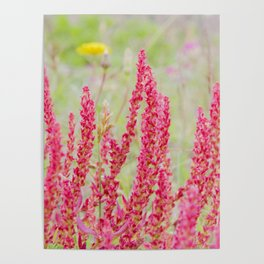 flowers in the dunes I Poster