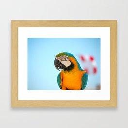 The parrot Framed Art Print