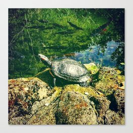 A turtle Canvas Print
